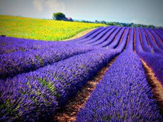 itinéraire de voyage : meilleure carte postale de la Provence - Adresses Exclusives